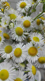 Flowers, Nature, Plants, Summer, August