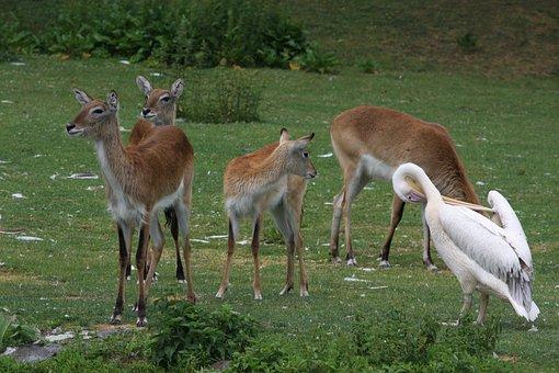 Armpits, Animal, Animals, Bird, Deer