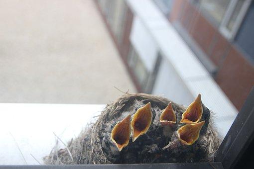 Bird, Cub, Nest, Risers, Feeding, Nestling