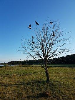 Bird, Branch, Bullfinch, Bush, Cold, Normal, Dry