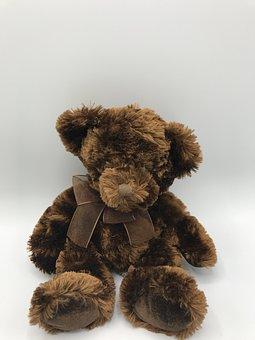 Gift, Teddy Bear, Toys, Collection, Model, Doll, Bear