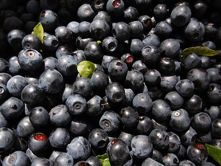 Blueberries, Berries, Forest, Blue, Berry, Blueberry