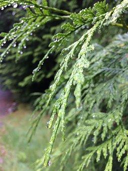 Green, Forest, Rain, Nature, Natural, Environment