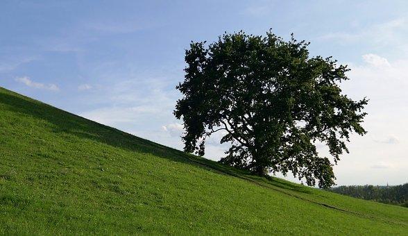 Tree, Hill, Slope, Meadow, Green, Sky, Landscape