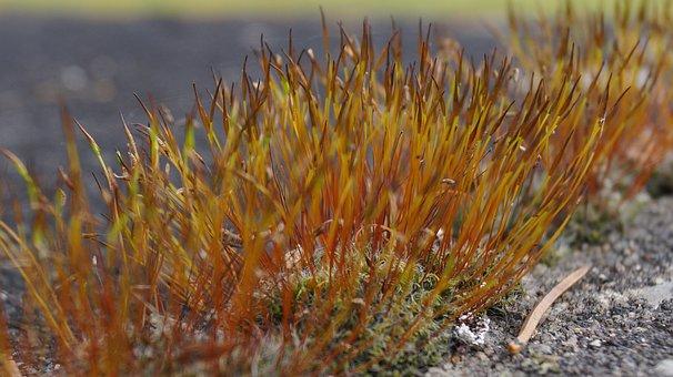 Moss Braid, Natural Beauties