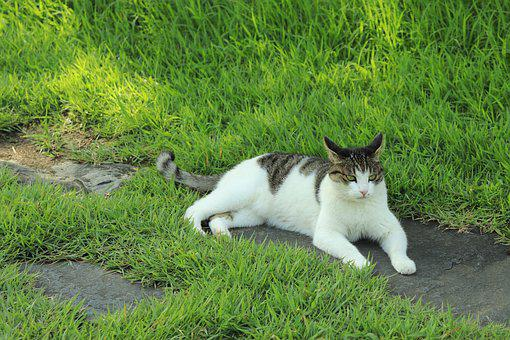 Cat, Animal, Pet, Grass, Green, Rest, Relax, Calm, Cute