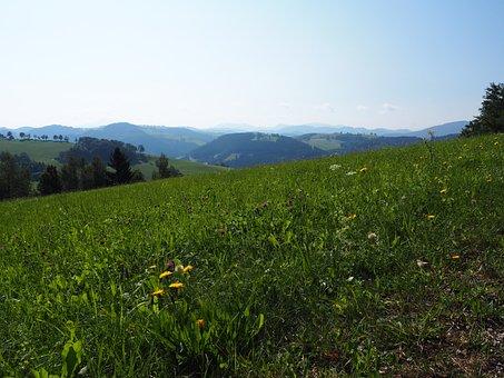 Meadow, Landscape, Nature, Sky, Clouds, Field, Green