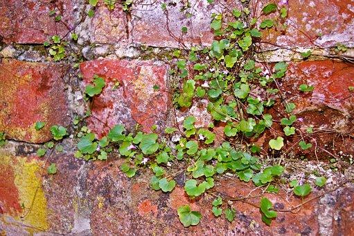 Wall, Stone Wall, City Wall, Stones, Background, Facade