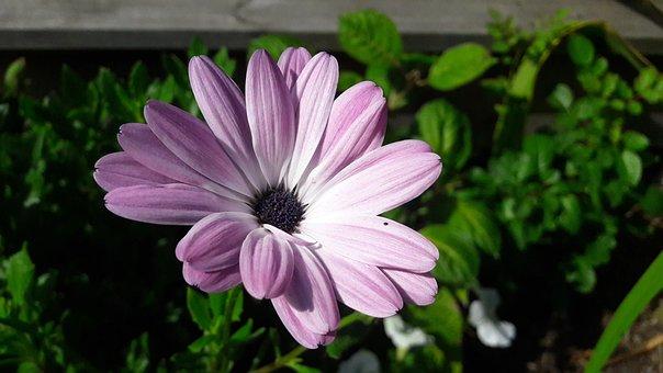 Flowers, Plant, Plants, Flower, Summer, Flowering