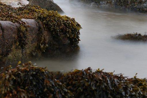 Seaweed, Rock, Sea, Water, Surf, Croatia, Steinig