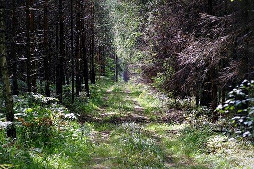 Forest, The Path, Leśna, Tree, Scrubs, Gęstwina