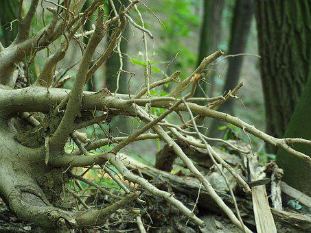 Log, Uprooted, Nature, Root, Tree Root, Forest