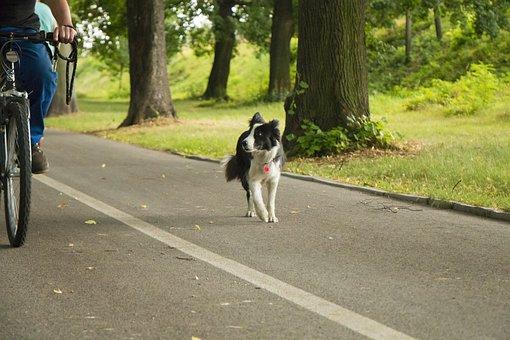 Park, Tree, Dog, Bike, Country, Nature, Light, A Walk
