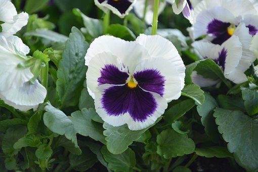 Flower, Thinking, Nature, Garden, Parterre, Border