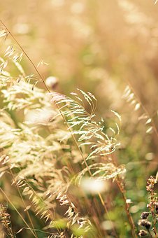 Gold, Nature, Plant, Yellow, Light, Bright, Sun, Summer