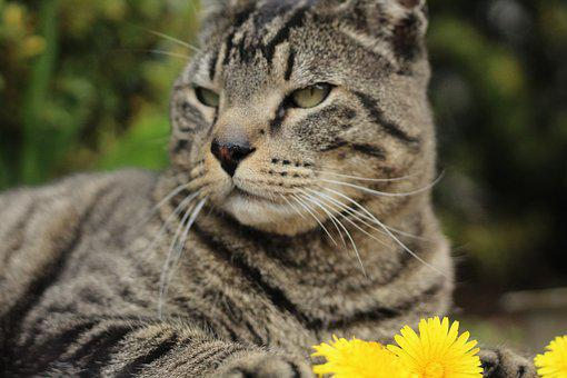 Animals, Pets, Photography, Cats, Flowers