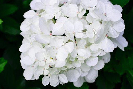 White, Blossom, Bloom, Frühlingsanfang, White Blossom