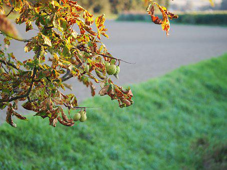 Leaves, Leaf, Chestnut Leaf, Autumn Mood, Fall Foliage