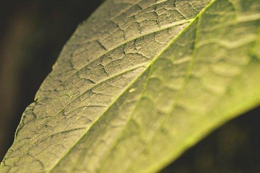 Leaf, Evening Sun, Nature, Close, Garden, Walk, Plant