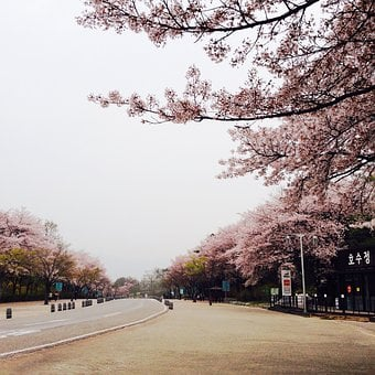 Republic Of Korea, Seoul Land, Amusement Park