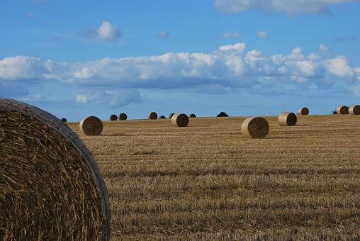 Harvest, On A Slope, Stohrollen, Stubble, Sky