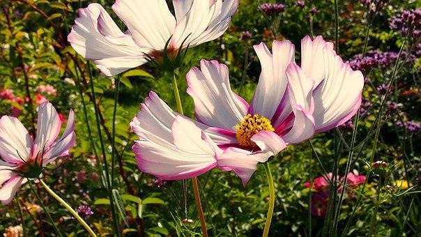 Space, Flower, Nature, Plant, Garden, Blooms, Macro