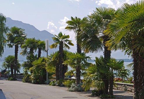 Montreux, Lake Geneva, The South-east Shore, Promenade