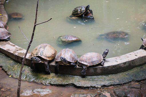 Tortoise, Water, Nature, Marine, Tropical, Natural