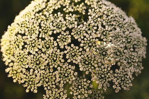 White, Flowers, Flower, Spring, White Flowers