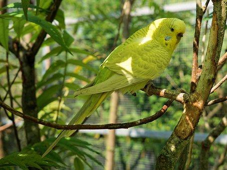 Budgie, Bird, Animal, Bill, Food, Animal World