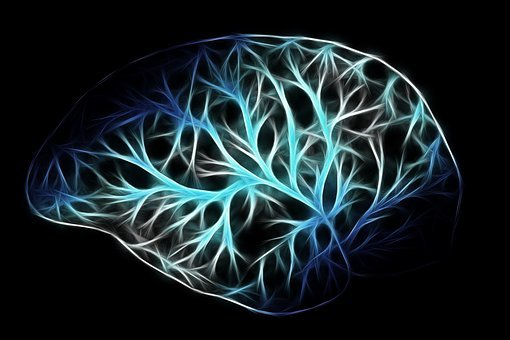 Brain, Biology, Anatomy, Think, Networking, Physiology