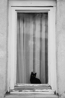 Black, Cat, Animal, Window, Street, Building, Pet