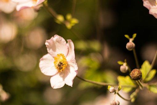 Flower, Leaf, Nature, Floral, Spring, Summer, Design