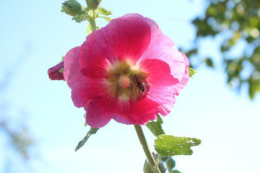 Blossom, Bloom, Flowering Twig, Pink, Bee, Pollination
