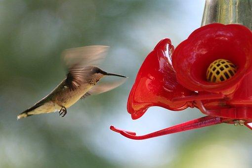 Hummingbird, Bird Feeder, Fly, Flying, Feeder, Bird
