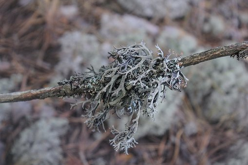 Moss, Lichen, Forest