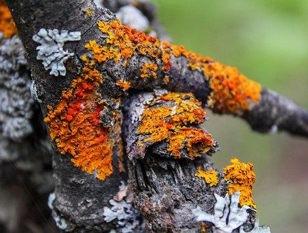 Lichen, Moss, Nature