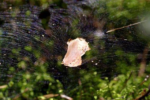 Cobweb, The Grid, Snap, Large, Trampoline, Designs