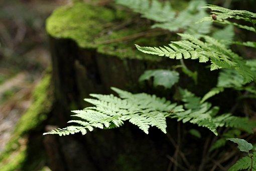 Fern, Forest, Undergrowth, Plating, Green, Trunk, Moss