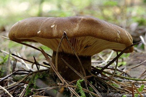 Mushroom, Plaques, Brown, Macro, Hat, Undergrowth