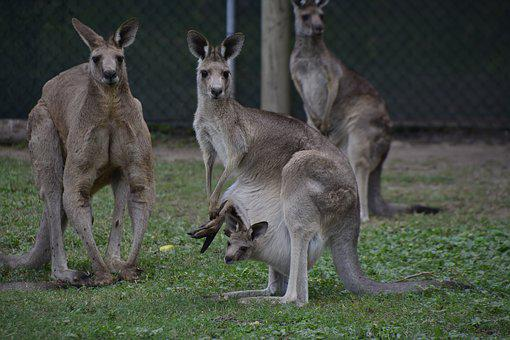 Australia, Brisbane, Animal, Wildlife, Native, Cute