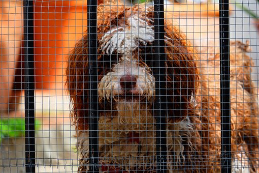 Dog, Net, Hence, Animal, Brown, Lonely, Look, Looking