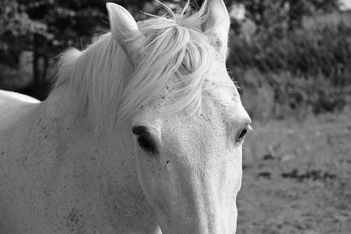 Horse, White, Head, Eyes, Next To The Horse, Animal