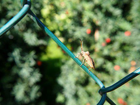 Fence, Wire, Beetle, Nature, Insect, Wire Mesh, Garden