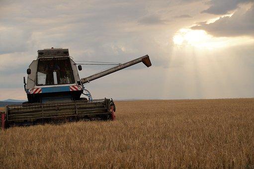 Harvester, Harvest, Grain, Summer, Sunset, Twilight