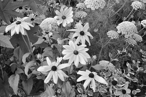 Flowers, Massif, Parterre, Image Black White, Summer