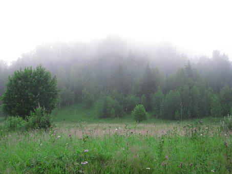 Fog, Forest Grass, Glade, Nature, Landscape, Morning