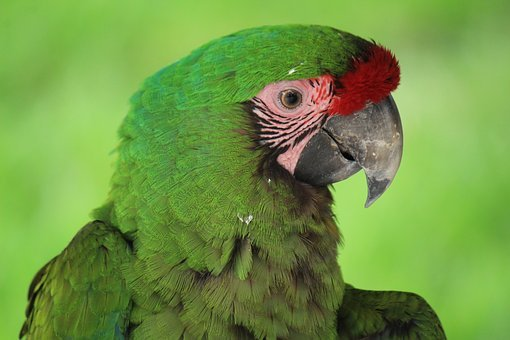Mexico, Macaw, Animal, Bird, Exotic Bird, Ave, Wings