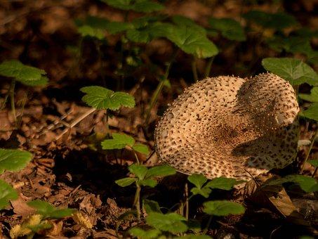 Forest, Mushroom, Nature, Mushroom Picking