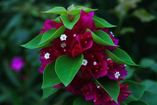 Flower, Macro, Plant, Closeup, Nature, Garden, Blossom